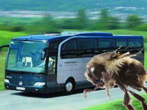 """Otobüsçülere yeni yolcu kitlesi: """"ARI"""""""
